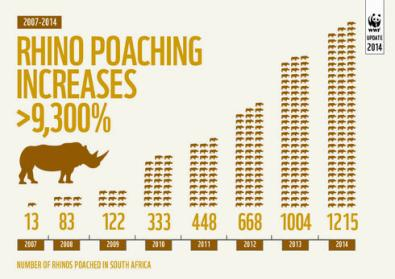 rhino_infographic_-_numbers_poached_in_sa_-_better_scaled_and_incl_2008